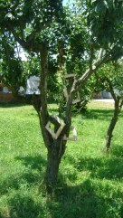 alberi e foglie cornici e quadri